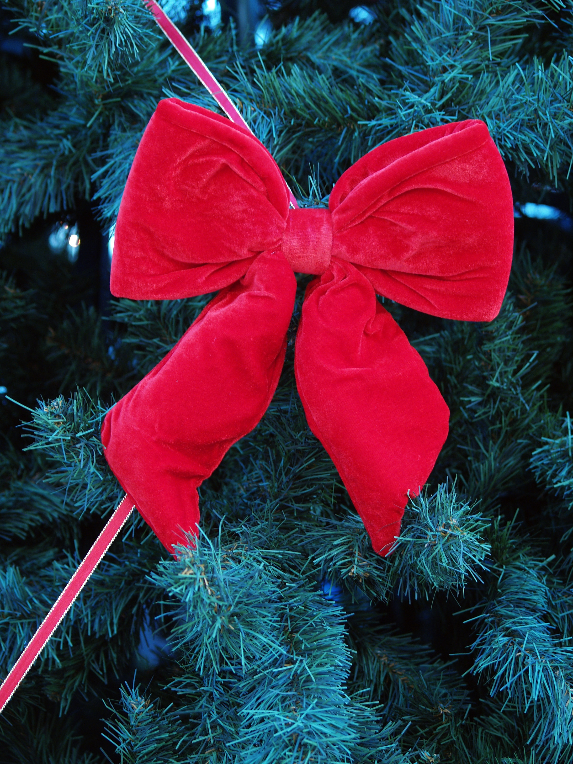 christmas bow Oral sex soon takes place,